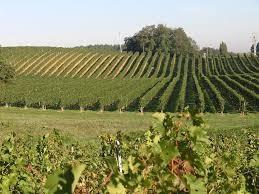 Les vignes de l'Armagnac